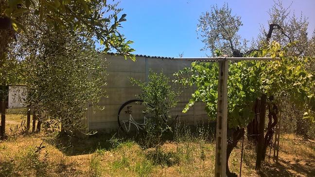 Rustico, Casale in Vendita – Rif.121